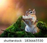 Closeup Of A Cute Chipmunk In...