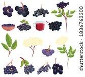 Elderberry Icons Set. Cartoon...