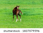 Portrait Of Baby Horse In The...
