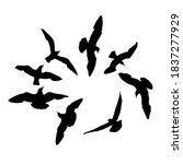 Set Of Seagulls Birds  Nautica...