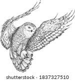 Owl In Flight Northern Black...