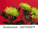 Three Yellow Chrysanthemums On...