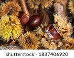 Top View Chestnut Fruits In...