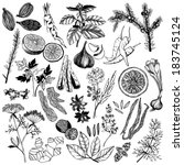 anise,aroma,asian,basil,black,caraway,cardamom,cardamon,citrus,clove,collection,cumin,dill,drawing,engraved