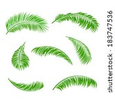 palm leaves isolated on a white ... | Shutterstock .eps vector #183747536