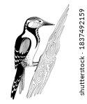 Woodpecker On A Tree In Doodle...