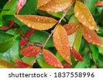 Raindrop On Leaf In Nature...