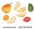 pears sliced and pear isolated...   Shutterstock . vector #1837699069