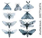 Se Blue Night Moth  Indigo...
