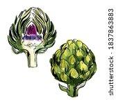 artichoke. sketch of food... | Shutterstock .eps vector #1837863883