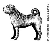 realistic shar pei. dog breed   ... | Shutterstock .eps vector #1838113459