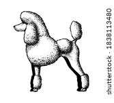 realistic poodle dog. dog breed ... | Shutterstock .eps vector #1838113480