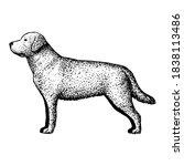 realistic labrador retriever.... | Shutterstock .eps vector #1838113486