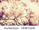Magnolia Flower On Textured...