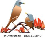 chestnut tailed starling  that... | Shutterstock .eps vector #1838161840