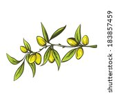 artistic olive branch for food... | Shutterstock .eps vector #183857459