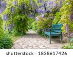 Wisteria Alley In Blossom In A...