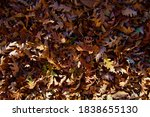 colorful backround image of...   Shutterstock . vector #1838655130