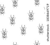 Vector background with handmade illustration of insects, beetles. Black and white entomological background.