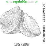 savoy cabbage. detailed line... | Shutterstock .eps vector #1838699509
