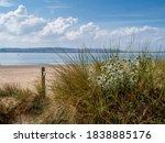 Sea Holly And Sand Dunes Near...
