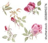 compositions with roses on a...   Shutterstock . vector #1838890276