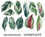 Set Of Green Tropical Leaves On ...