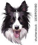border collie portrait  vector... | Shutterstock .eps vector #1838905480