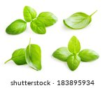 basil leaves spice closeup... | Shutterstock . vector #183895934