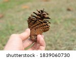closeup hand people holding... | Shutterstock . vector #1839060730