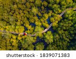 Wooden Bridge With Mangrove...