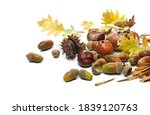 Acorns  Chestnuts And Medlars...