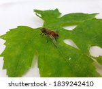 Insect Photography   Macro Sho...