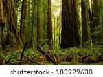 Redwood National Park 05 Moss...