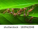 Harmony Of Red Ant