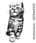 Kitten. Hand Drawn Sketch....