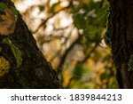 Branch Of An Apple Tree In A...