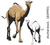 vector illustration of a camel.