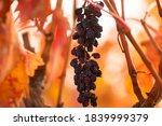 Natural Raisins In The...