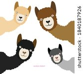 Alpaca Cartoon Art Animal Design
