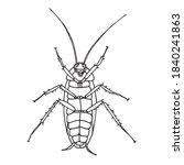 cockroach pest  contour vector... | Shutterstock .eps vector #1840241863