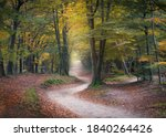 Winding Road In An Autumn...