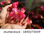 Garden Flowers  Greenhouses....