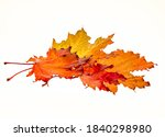 Group Of Autumn Leaves On A...