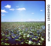 everglades with filter effect   ... | Shutterstock . vector #184034930