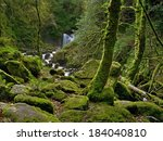 enchanted forest and creek near ...   Shutterstock . vector #184040810
