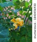 flowers in nature  flower... | Shutterstock . vector #1840456930