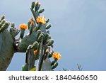 Multiple Orange Flowers On A...