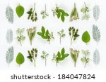 an image of fruits and leaves | Shutterstock . vector #184047824