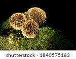 Mushrooms On The Dark...
